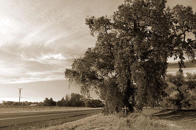 Cross and Tree,Napa