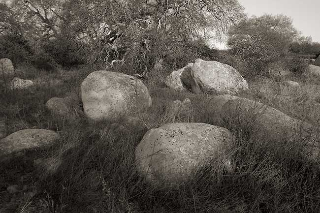 Lichen rocks &Oaks
