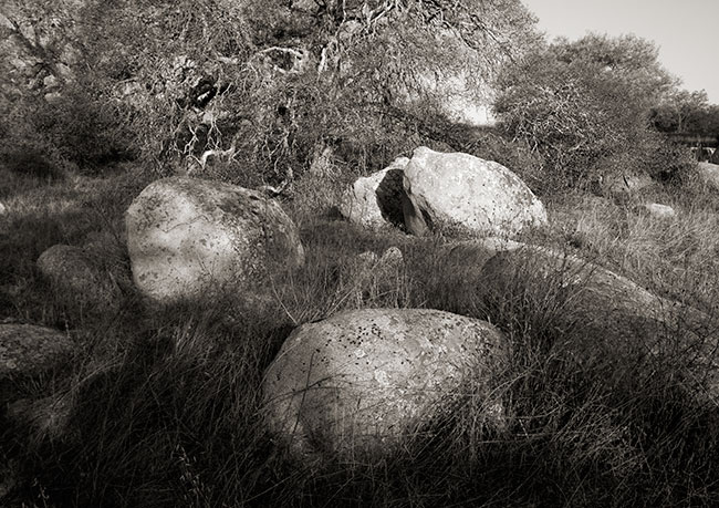 Lichen andRocks