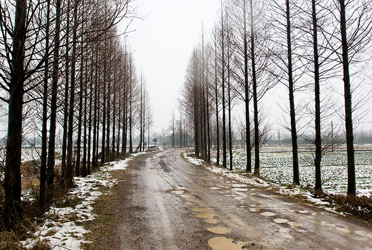 Jiashan Country Road