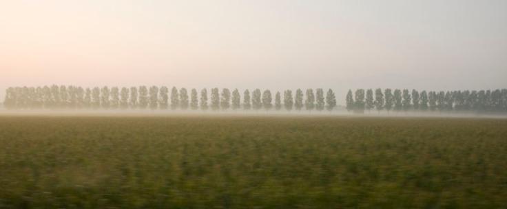 4407_Netherland_trees