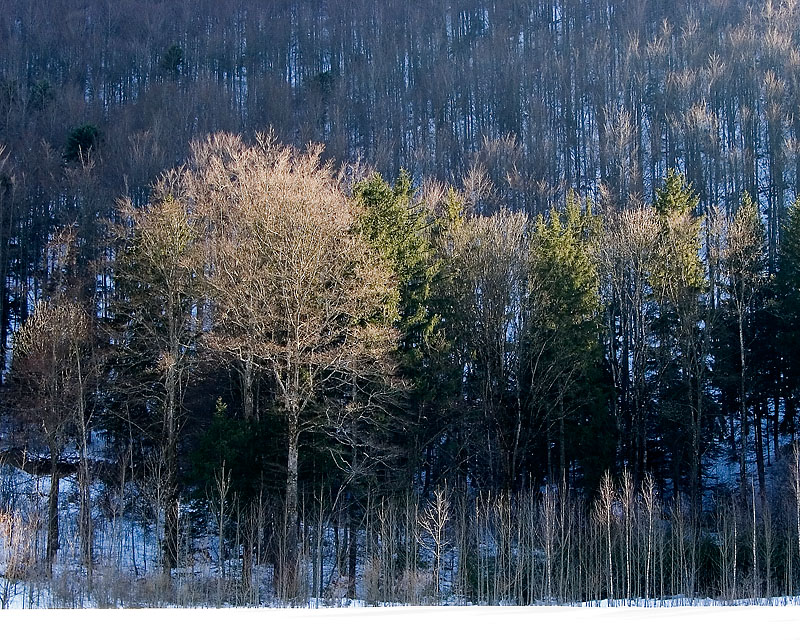 03-2005 LaHuette trees