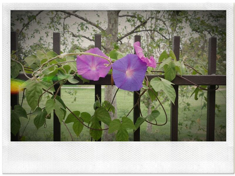 05-22-14_Reata_RSM-09-48-35_FX_Polaroid
