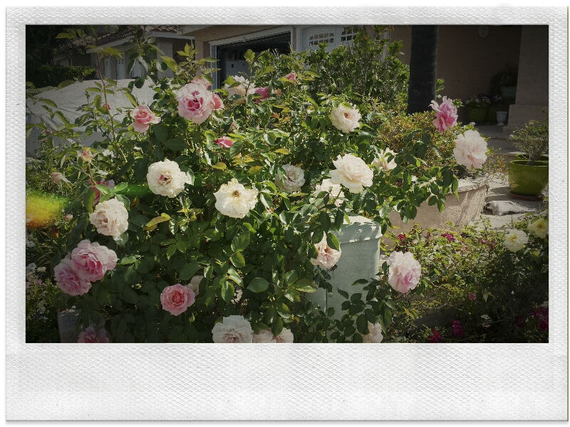 05_17_2014_Reata_RSM_09-54-26