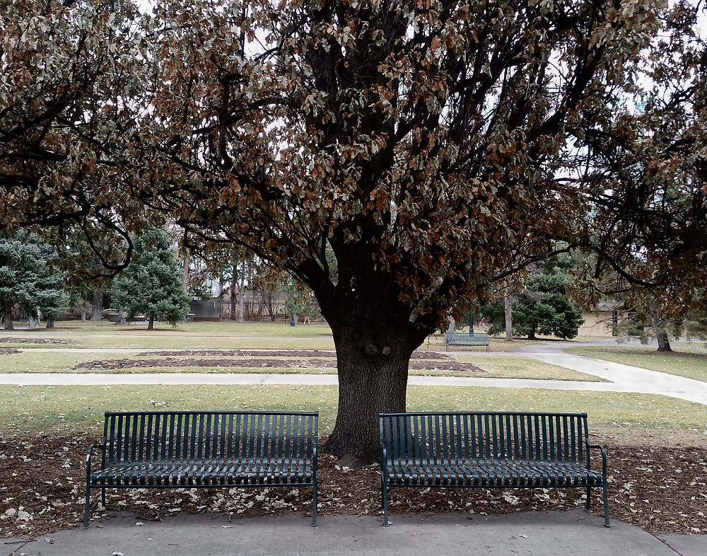 02-14-15_Cheesman_Park_benches_112029_11x14