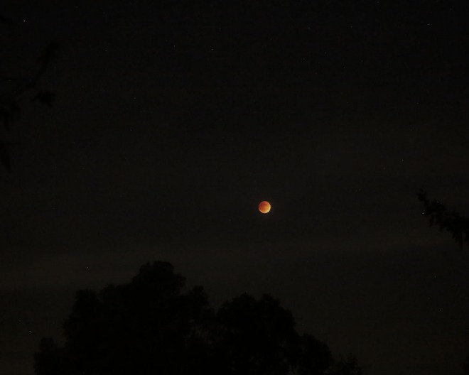 09-27-15_KI6A0466_Blood moon eclispse