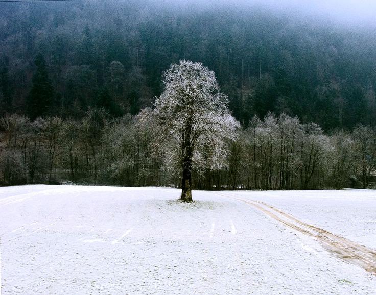 01-14-05 Winter Tree - LaHuette CH_0049_web