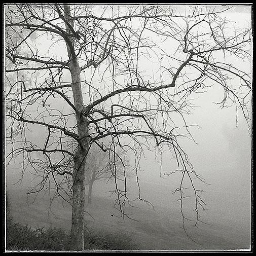 01-17-16 RSM fog_073943-01_TCGC_tree