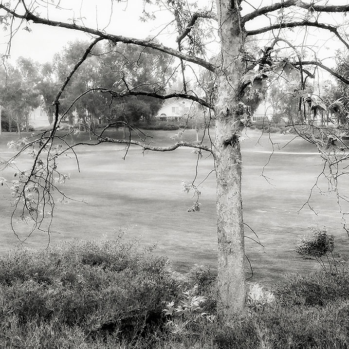 03-28-16_Urban_Tree_Spring_083450-03-02