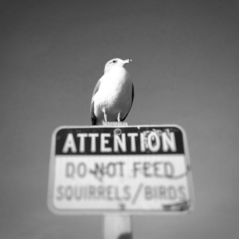 12-27-16_Seagull_protest_092646-03_San_Diego