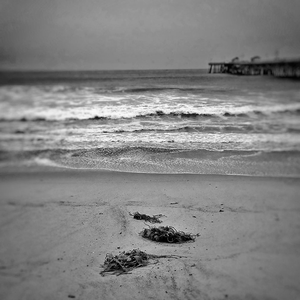 06-22-17_Seaweed_San_Clemente_beach_100749