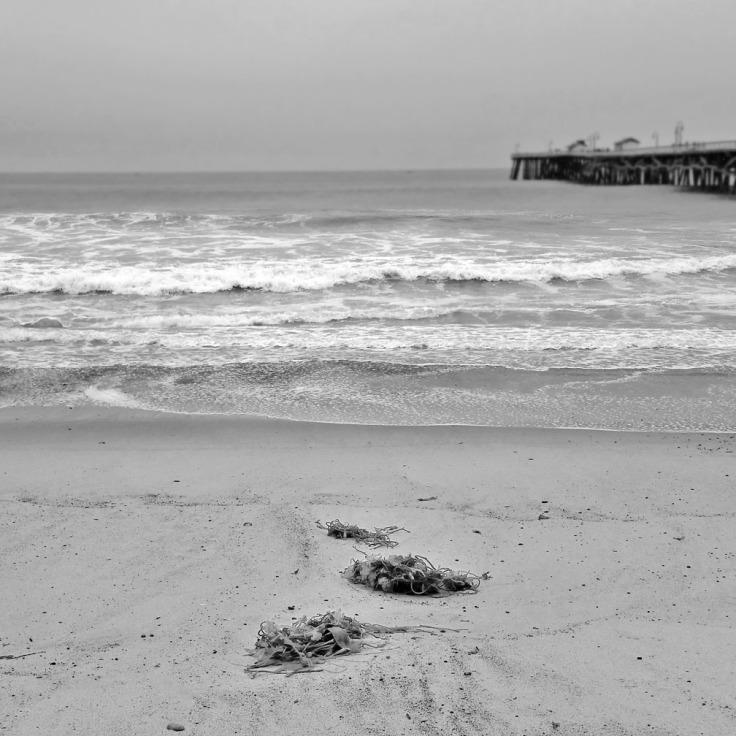 06-22-17_Seaweed_San_Clemente_beach_100749v2