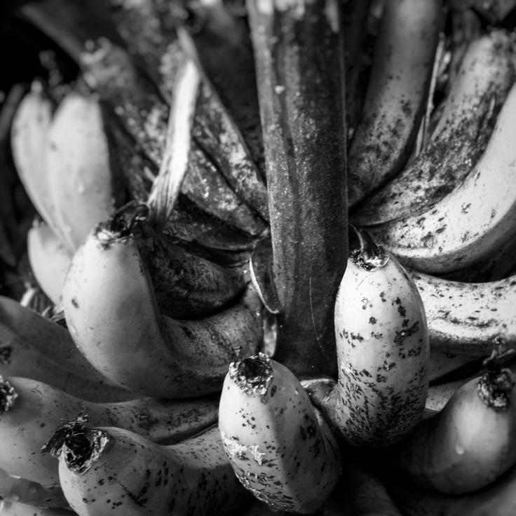 11-23-17_bananas_161804-04_Waimea_HI