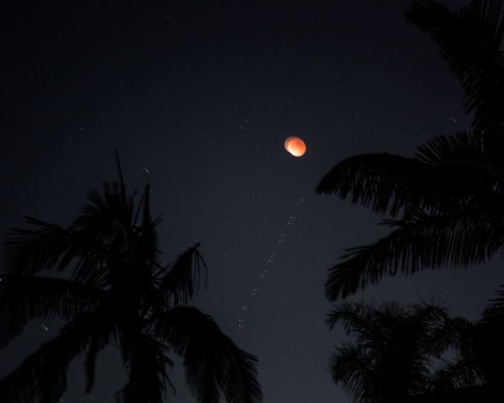 01-31-18_Super_Blue_Blood_Moon_n_plam_trees_KI6A8012_RSM