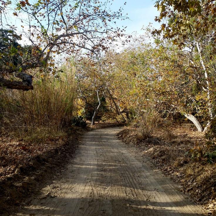 12-20-17_Arroyo_Trabuco_trail_092919-01_RSM