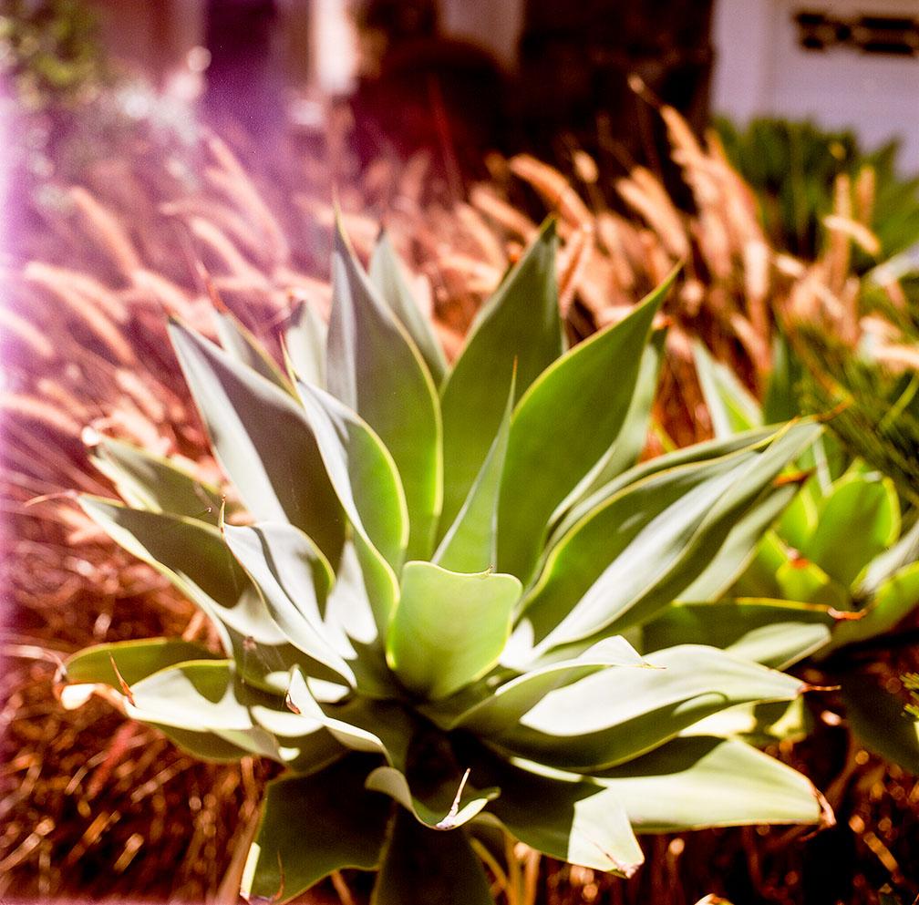 06-16-18_Gardening_for_Ordnance_53330010_roll2