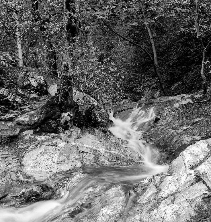 04-2006 - Cascasde Placerita Canyon - Spring Neg 11_1000px
