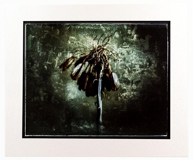 Mourning - H. Rag Metallic print KI6A2913