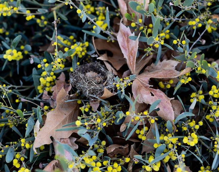02-20-20 Bird nest KI6A3473