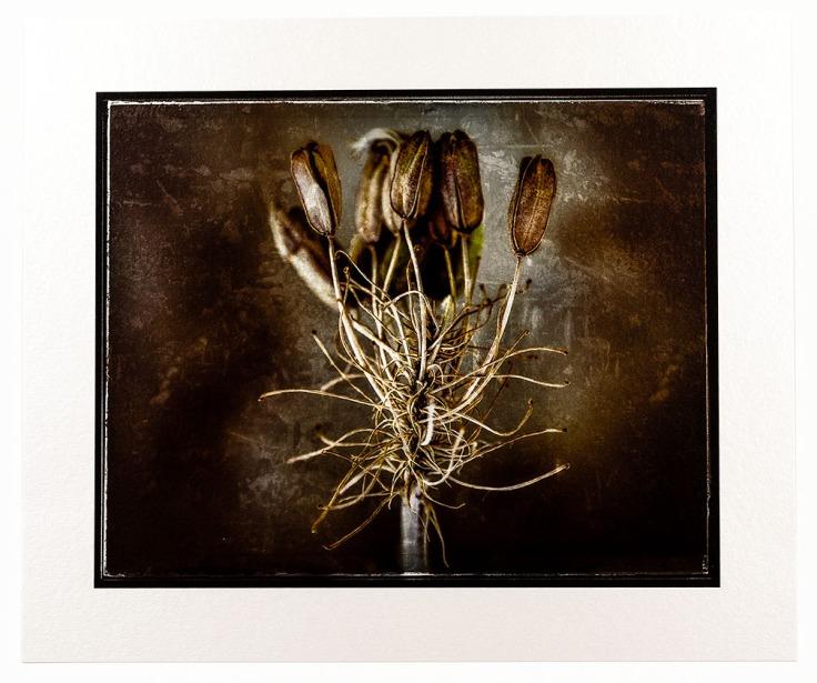 Bewilderment - H. Rag Metallic print - KI6A2921_11-17-19