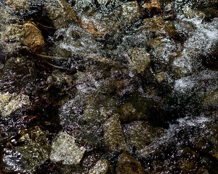 02-26-20 Oso Creek - Trabuco Cyn KI6A3648