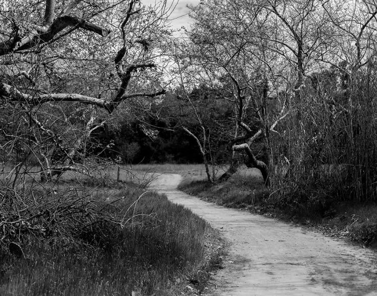 02-29-20 Trabuco Canyon KI6A3736