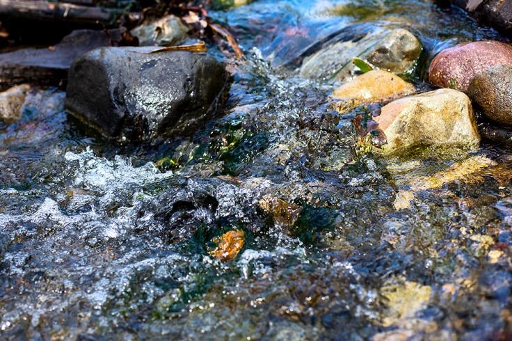 03-07-20 Oso Creek_0137 5DMk3