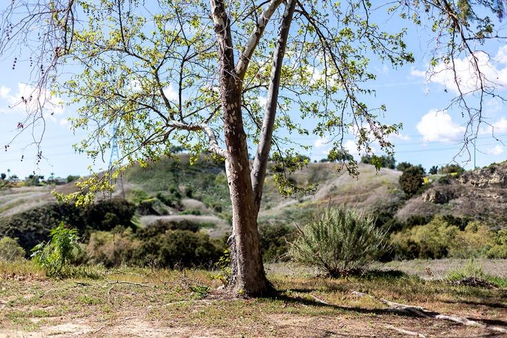 03-08-20 Informal Trail head KI6A4107vC